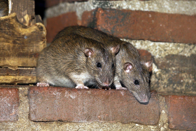какой утеплитель не грызут мыши