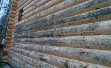 Синева и чернота на неокрашенной древесине